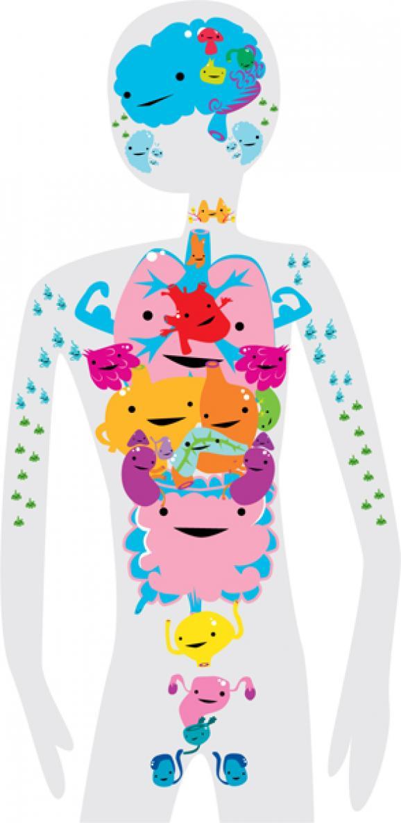 Organs clipart life science Your fun Cute Meet organs