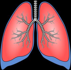 Organs clipart lung Lungs Clip free Art clip