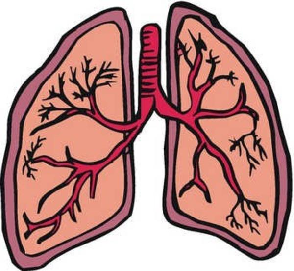 Organs clipart lung Lung%20clipart Lung 20clipart Free Clipart
