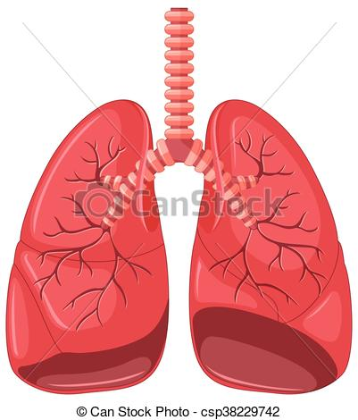 Organs clipart lung Lung diagram  of of