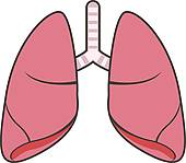 Organs clipart lung Vector lungs GoGraph and Clip