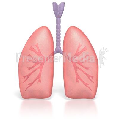 Organs clipart lung Lung%20clipart Lung Clipart Free Clipart
