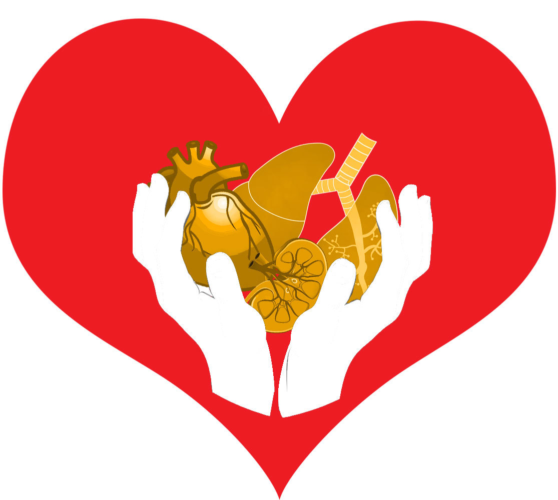 Organs clipart organ donation At University in us of