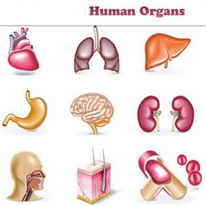 Organs clipart organ donation Bring the can and death