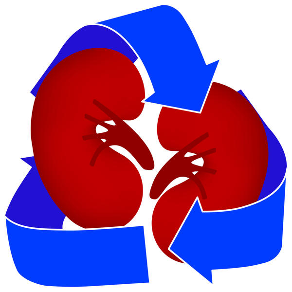 Organs clipart organ transplant Insights Organ organ  Advantages