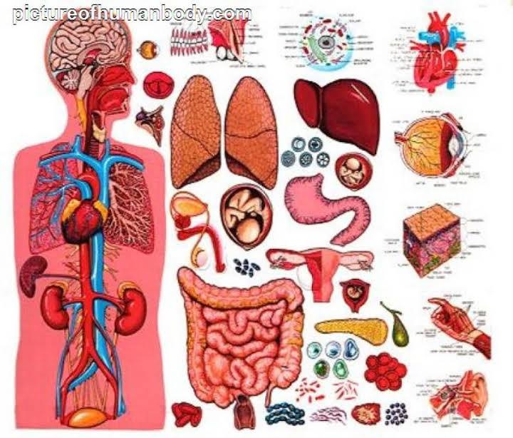 Organs clipart organism Function 6B Questions structure Quiz