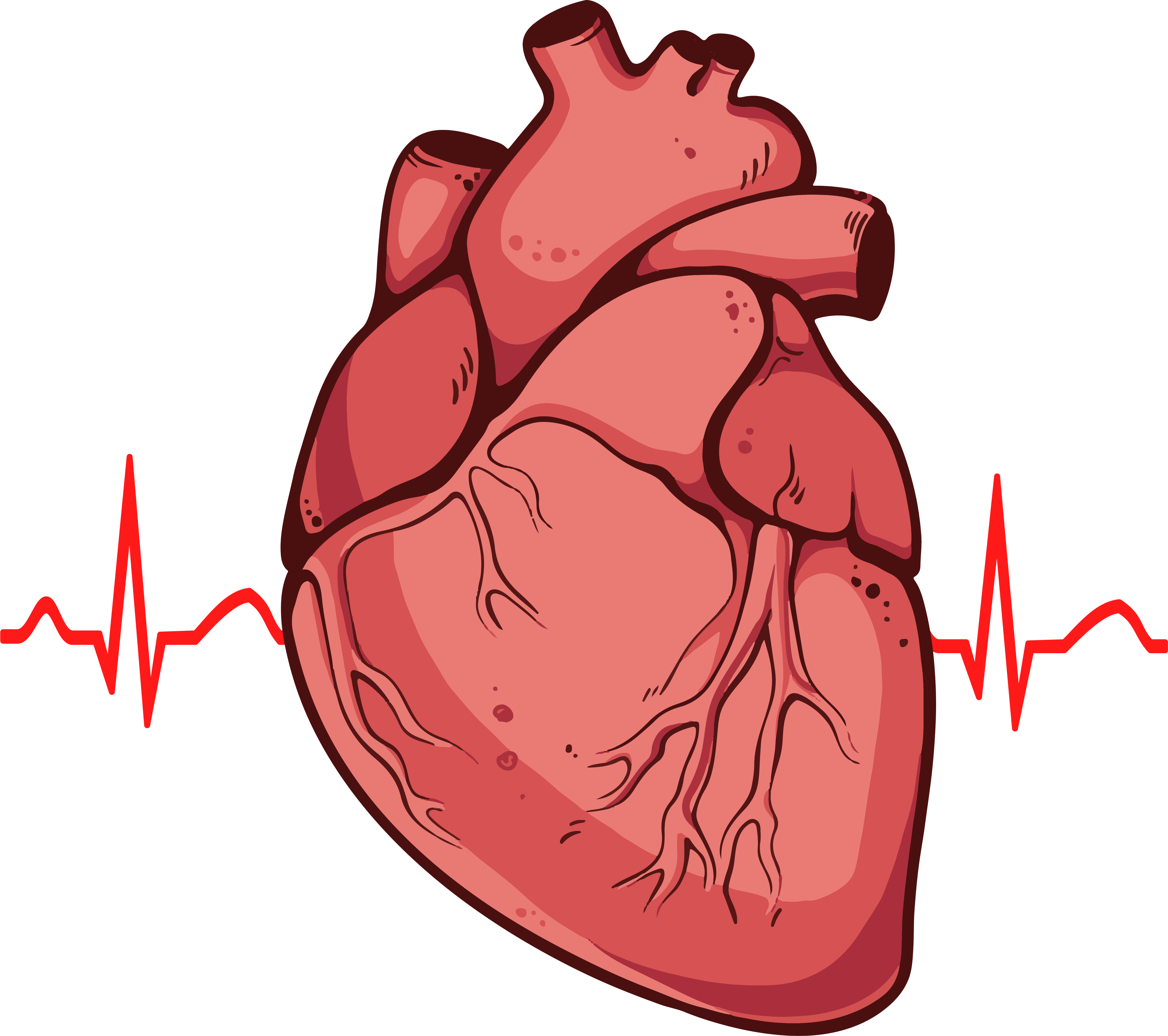 Organs clipart real heart Real Png  Heart