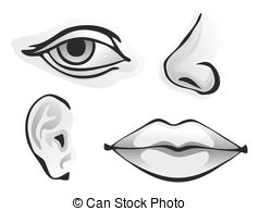 Organs clipart sence And illustration Stock different