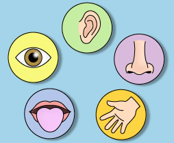Organs clipart sence Sight hearing sense: Senses: Process