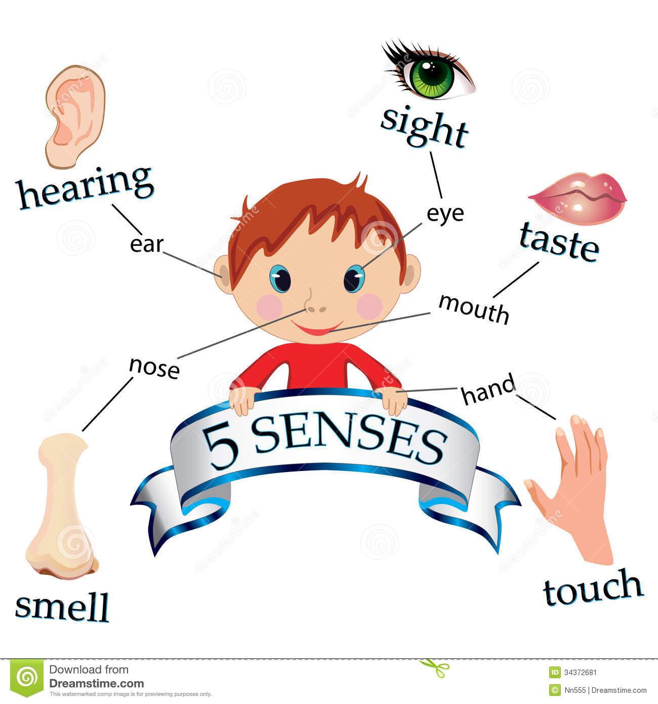 Organs clipart sence Senses 5 senses 1000+