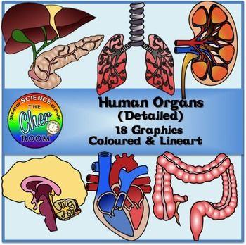 Organs clipart system biology ART EDUCATION TeachersPayTeachers  on