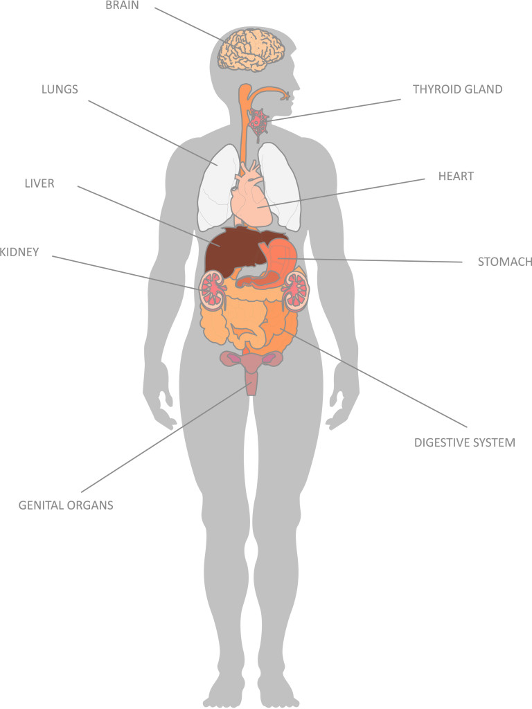 Organs clipart system biology Resources Functions their Functions their