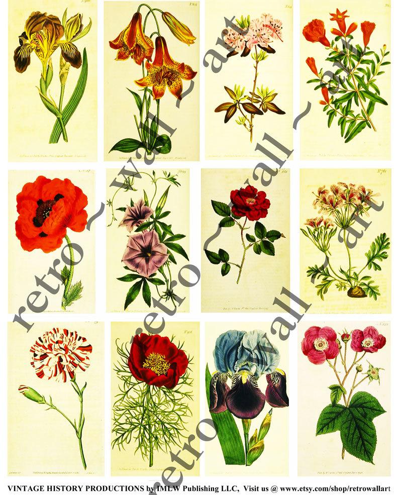 Ornamental clipart botanical #1