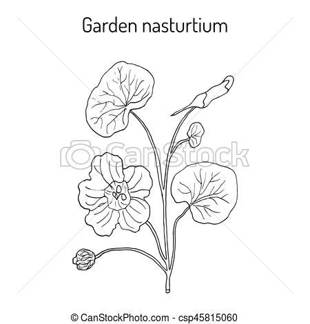 Ornamental clipart botanical #3