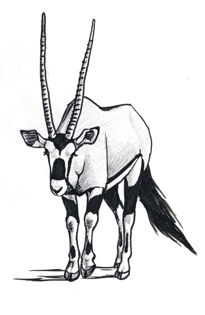 Oryx clipart Photo#3 Oryx Oryx drawing Drawing