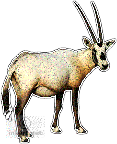 Oryx clipart cartoon Line Illustrations leucoryx) Art Oryx