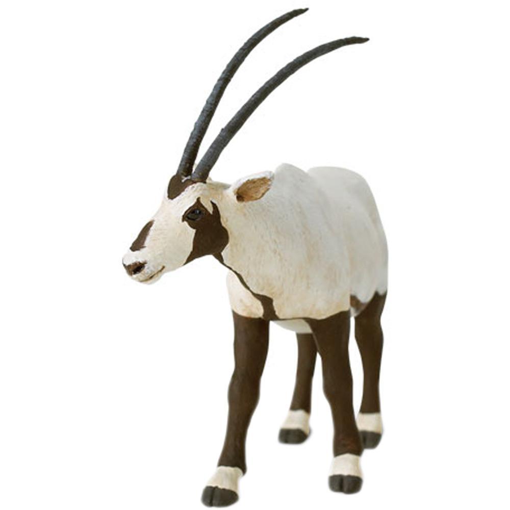 Oryx clipart arabian oryx Arabian photo#21 oryx Oryx face