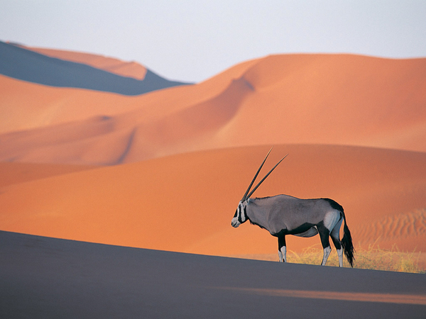 Oryx clipart cartoon At art Images Clker Antelope