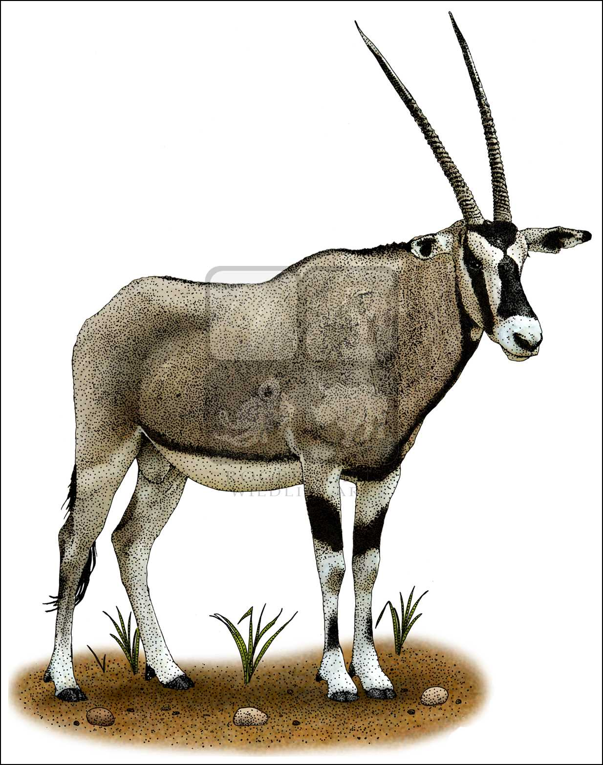 Oryx clipart cartoon Color Full Illustrations Art and