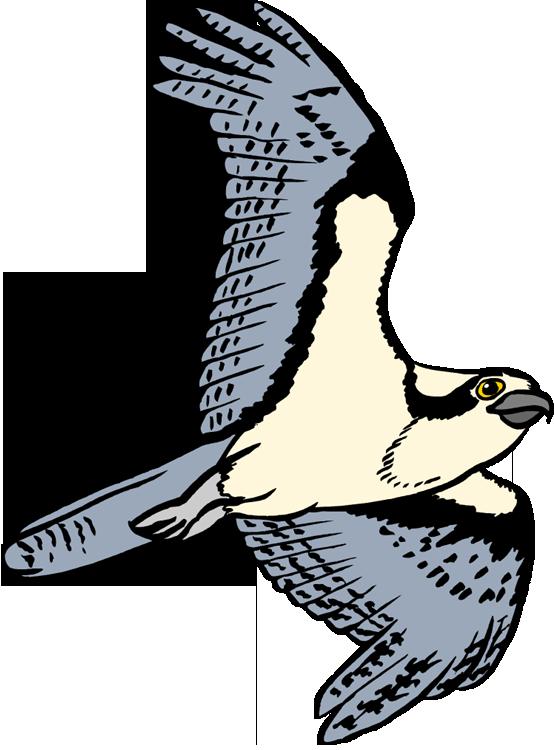 Osprey clipart Osprey Flight Clipart Osprey Free