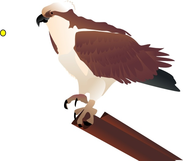 Osprey clipart For use free Osprey Branch