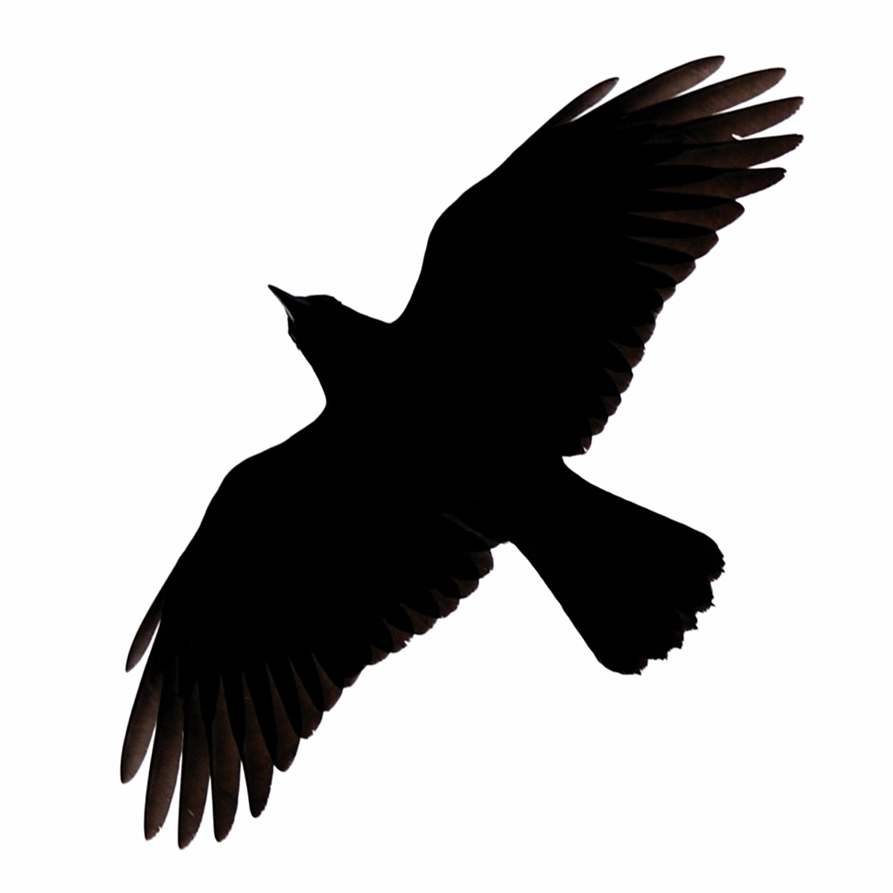 Blackbird clipart flying crows Clip Art Images Free on