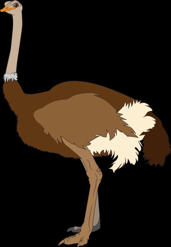 Ostrich clipart To Free Clip ostrich6 &