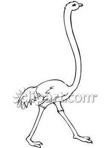 Ostrich clipart funny Free and A Picture Royalty