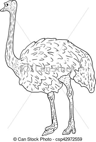 Ostrich clipart sketch White ostrich big Sketch a