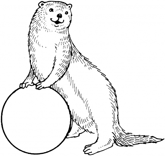 Otter clipart drawn And Pictures cartoon Clipart Free