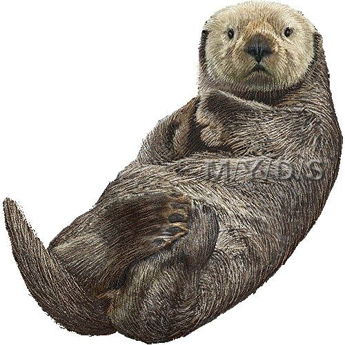 Sea Otter clipart land #12