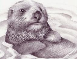 Otter clipart sea otter Clipart Otter Sea Free Otter