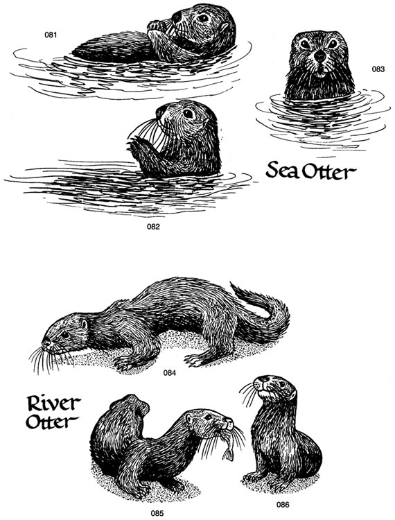 Otter clipart shrew Free River has some Printout