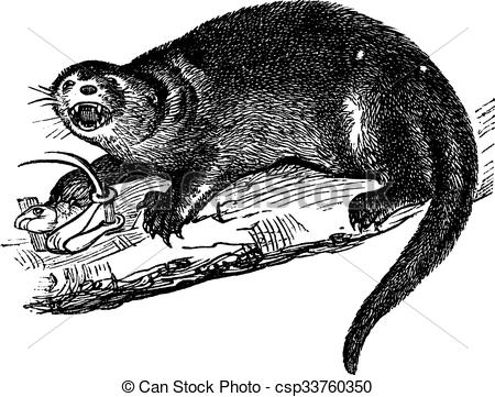 Otter clipart shrew Or or engraving Lontra Lontra