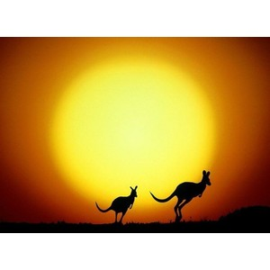 Outback clipart kangaroo Outback Art  Download Free