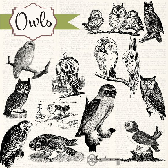 Owl clipart vintage Brushes Owls & Clipart Clipart