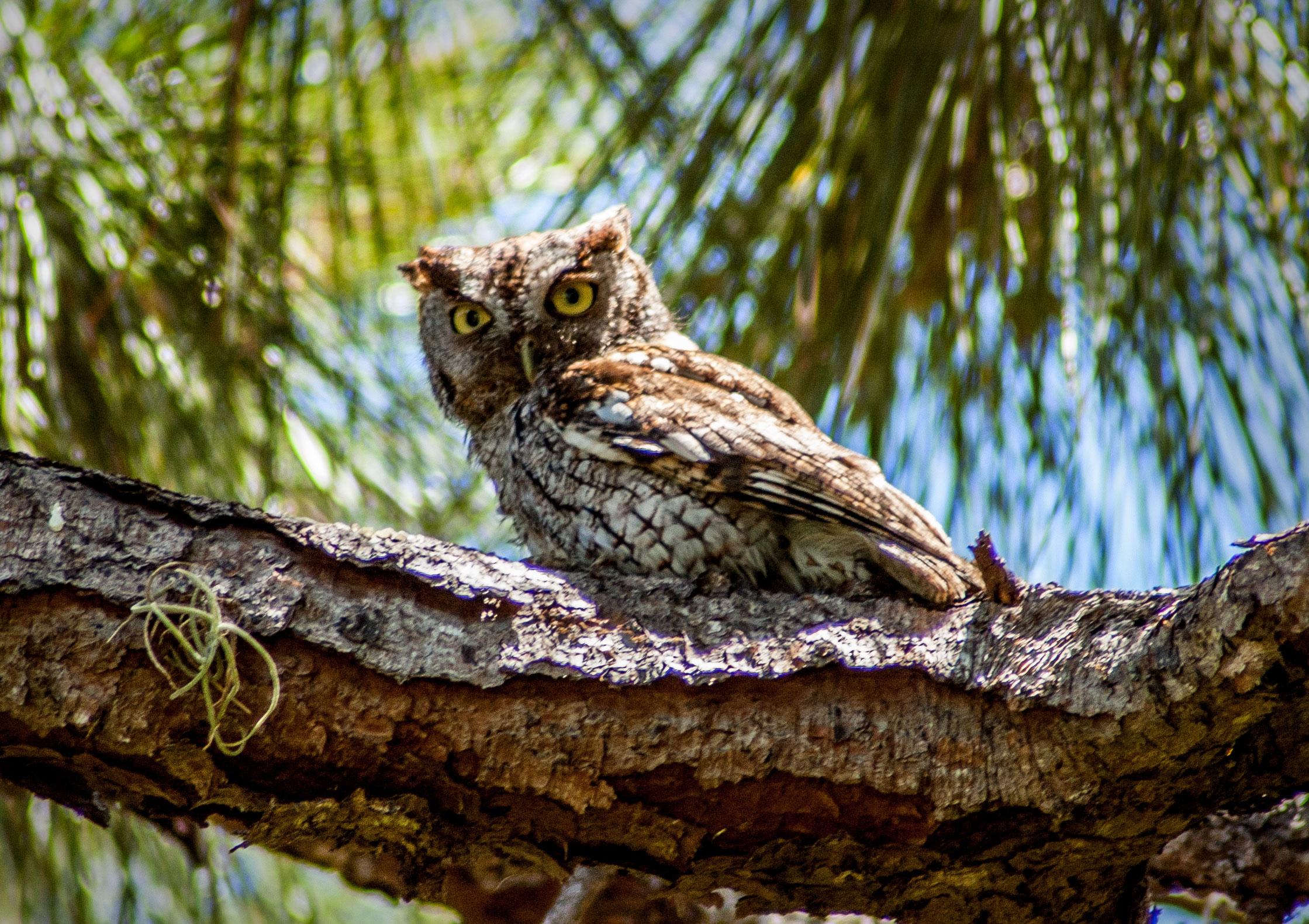 Owlet clipart egg Owl New Floridians Owl News