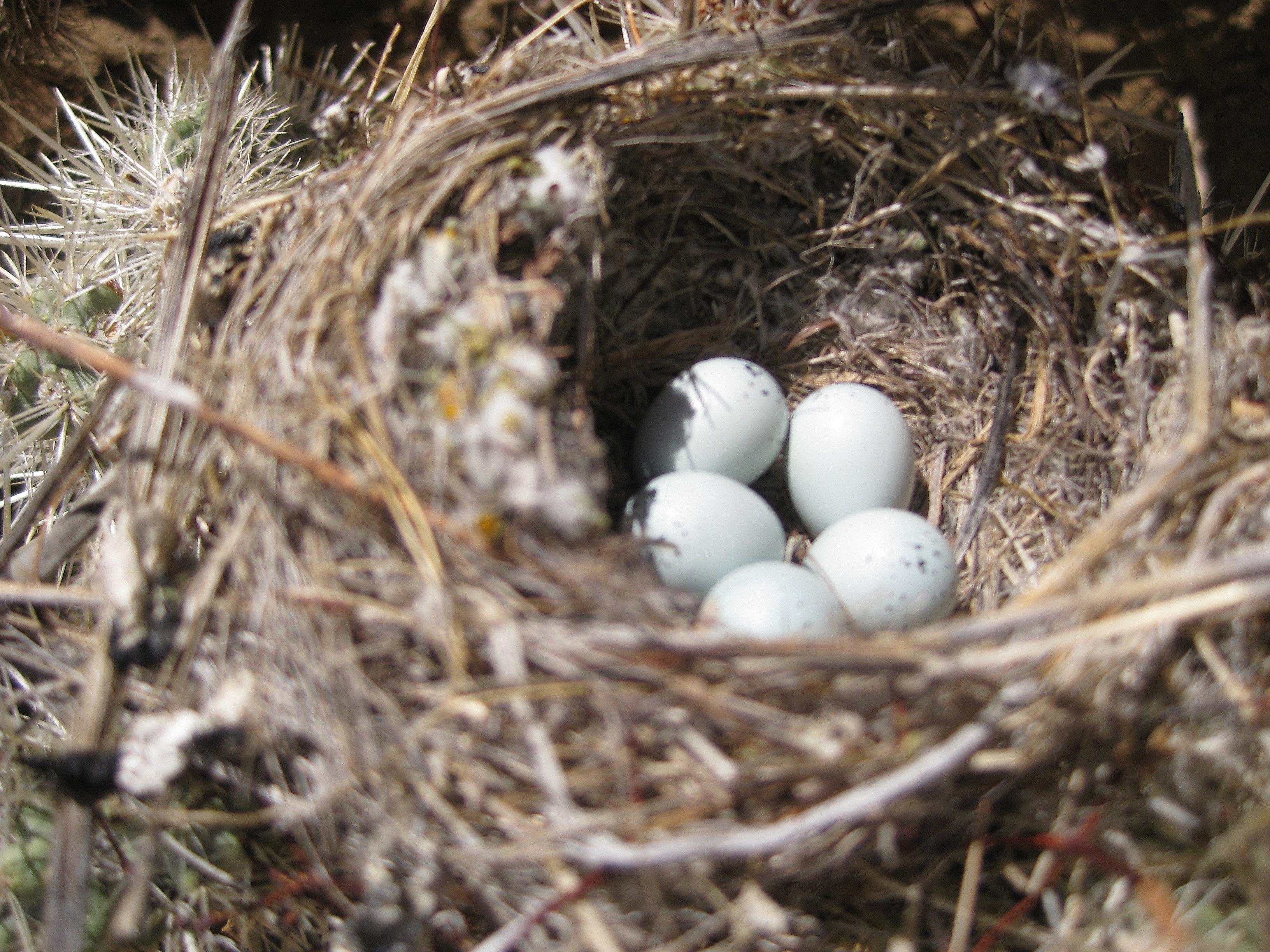 Owlet clipart egg Eggs owl photo#28 Owl Baby