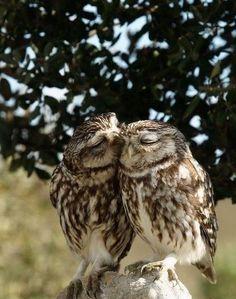 Owlet clipart hanukkah Image a on halagos owls