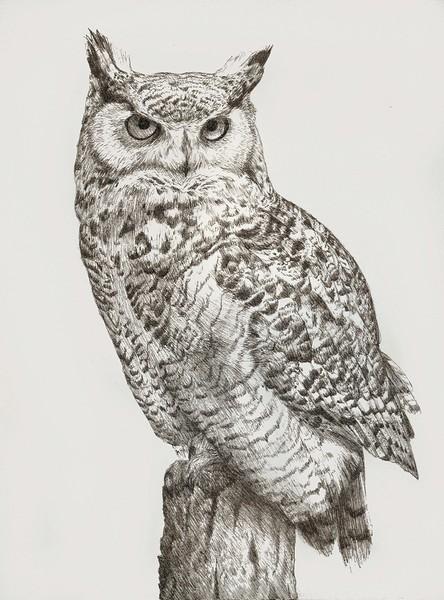 Owlet clipart pencil Art Great Owl Horned Owl