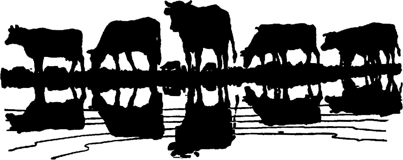 Cow clipart cattle drive #5 37 Clipart clipart Fans