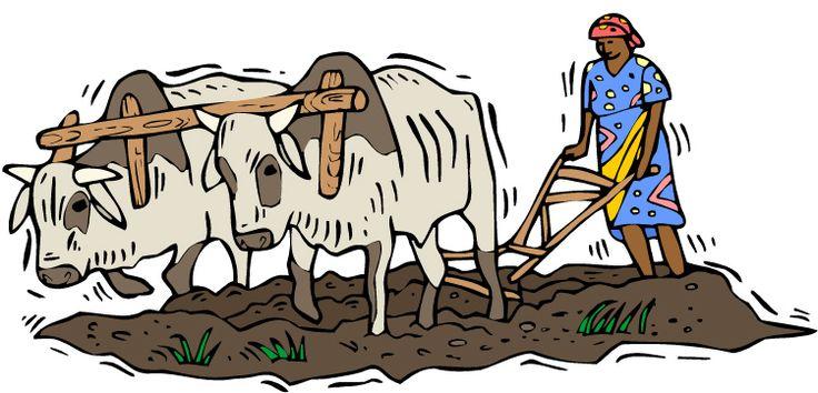 Ox clipart ploughing Ideas study Google Cartoon old