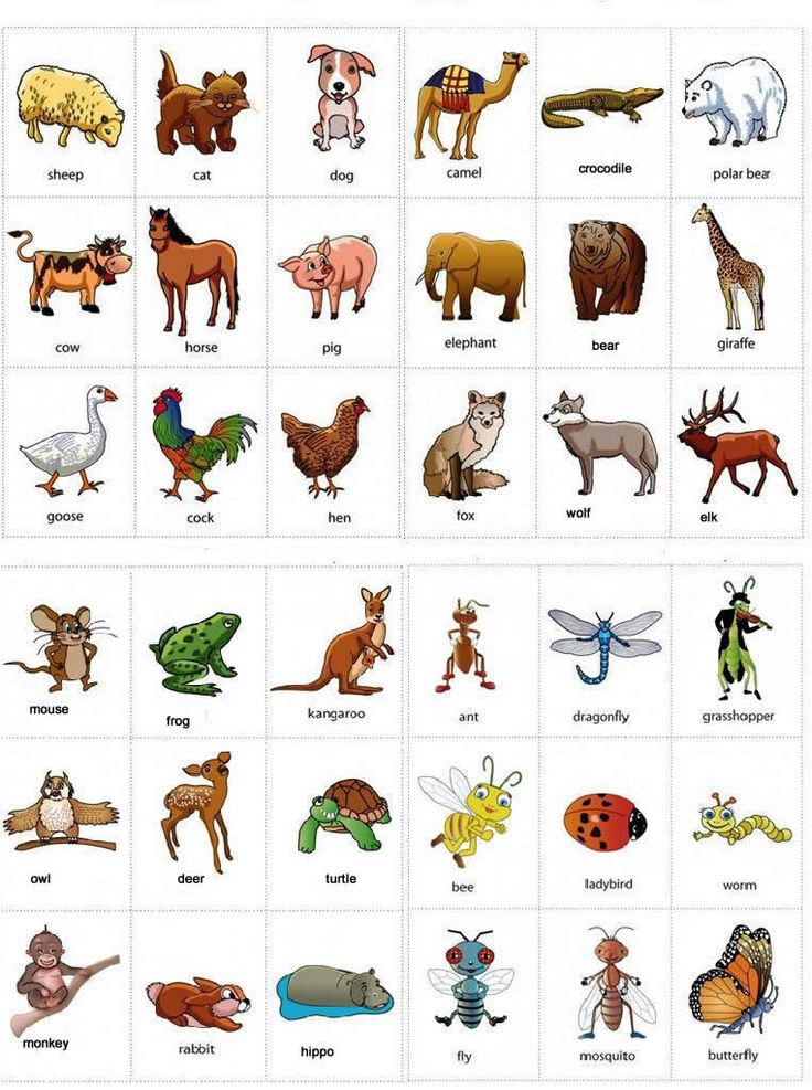 Coture clipart english language development English Learn animals Pinterest on