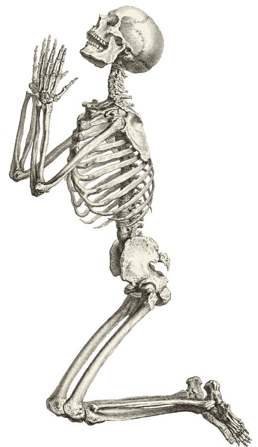 Bones clipart skelton Of casual halloween skeleton New