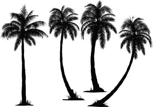 Palm Tree clipart coconut tree Black tree clipartfest clipart coconut