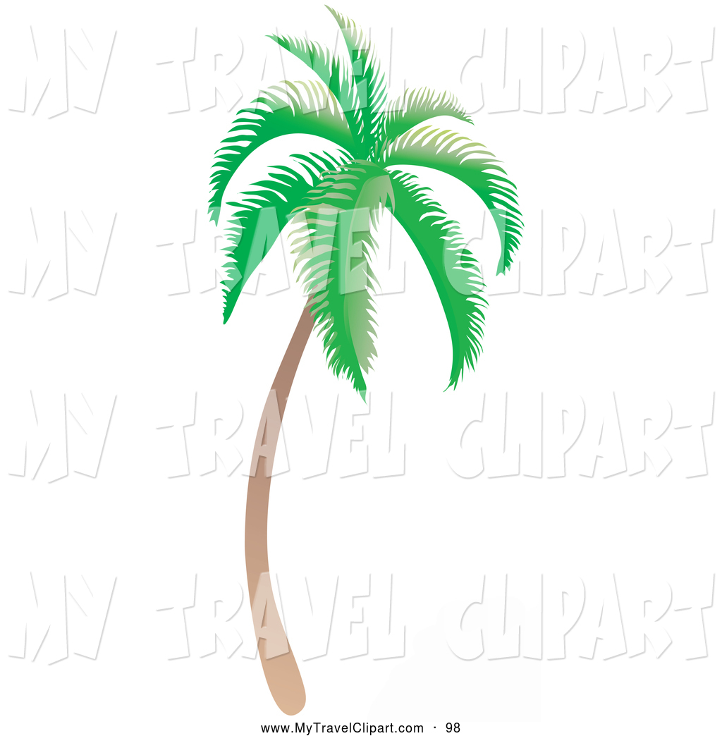Palm Tree clipart curved Trees Tree Coconut Towards Tropical