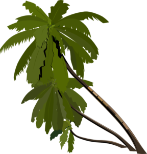 Palm Tree clipart palma Art Clip clip  Trees