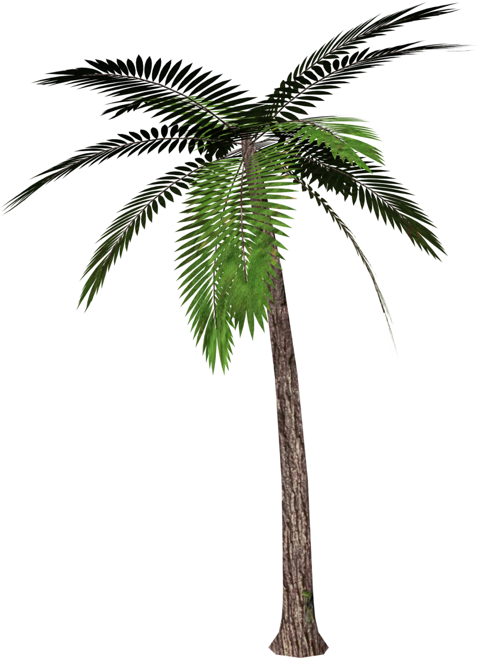 Palm Tree clipart real On images Free download Download