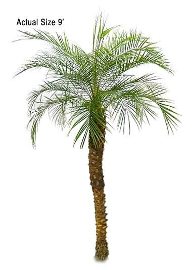 Palm Tree clipart real Clip art date clipart palm