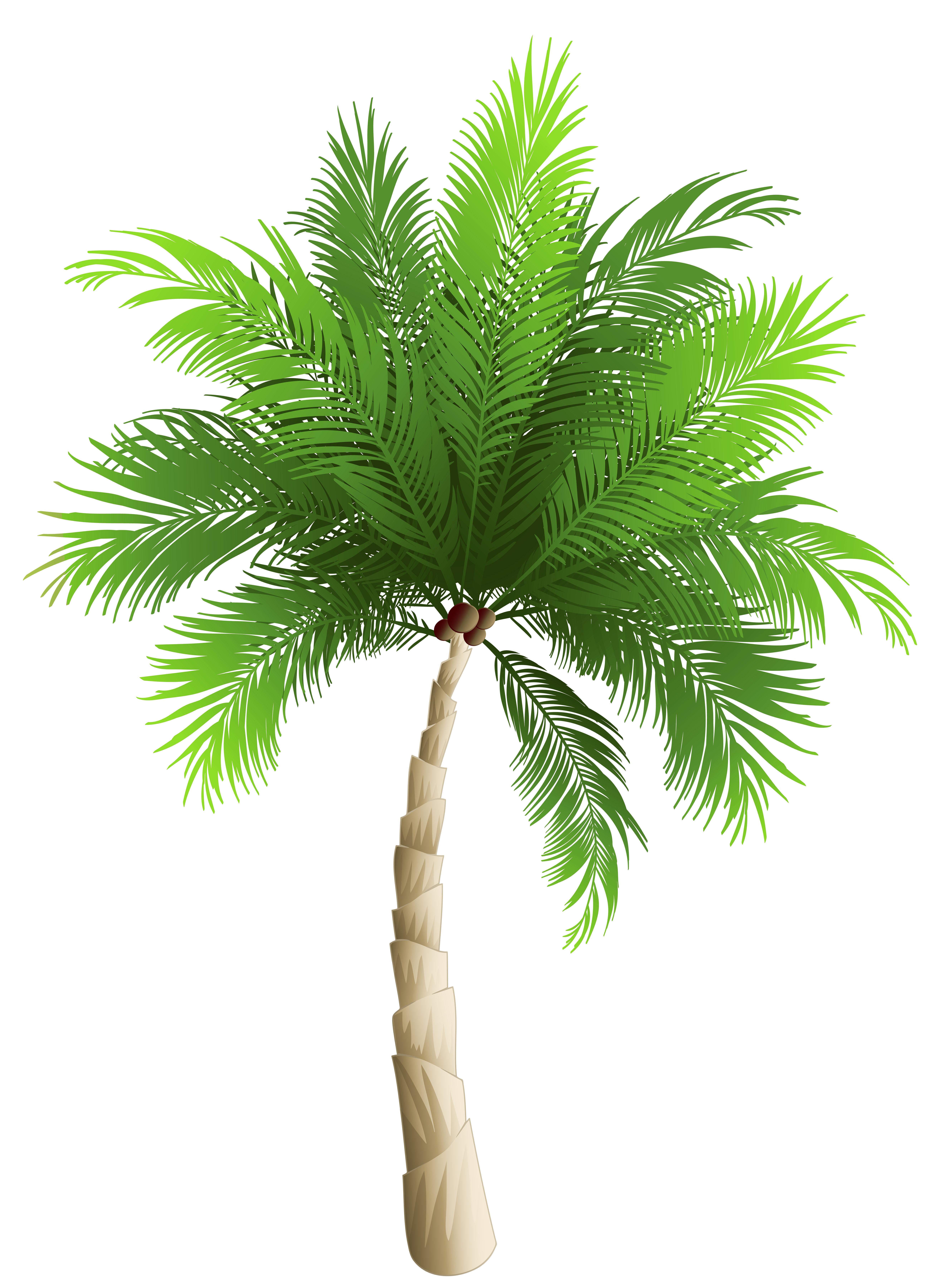 Palm Tree clipart real Party Png Palms Free Backgrounds